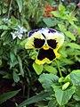 Flowers - Uncategorised Garden plants 176.JPG