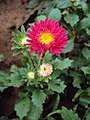 Flowers - Uncategorised Garden plants 71.JPG