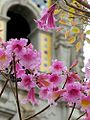 Flowers towers petals arches leaf leaves.jpg