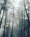 Foggy Morning ,.jpg