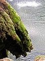 Fontaine des Tufs (Les Planches-près-Arbois) (12).jpg