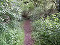 Footpath, Elsted - geograph.org.uk - 1340415.jpg
