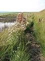 Footpath to Cley Eye car park - geograph.org.uk - 980887.jpg