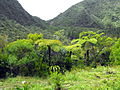 Forêt de Bébour 1.JPG