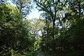 Forêt de Stambruges 05.jpg