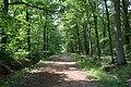Forêt domaniale de Bois-d'Arcy 40.jpg