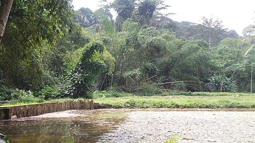 Forêt du banco ( Côte d'Ivoire )