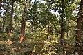 Forest - Budhibili - Dandadhar Road - Dhenkanal 2018-01-25 9646.JPG