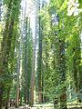 Foresta Umbra.jpg