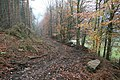Forestry Extraction Track, Quarry Bank Wood - geograph.org.uk - 615895.jpg