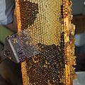 Fork-Beekeeping.jpg