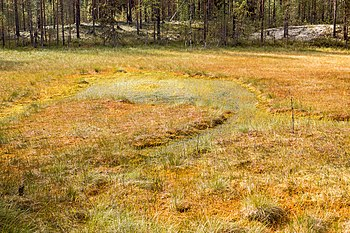 Formation of bogs (oligotrophic) In the climatic zone (taiga, forest-tundra) of the Arkhangelsk region. 3.jpg