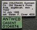 Formica criniventris casent0104874 label 1.jpg