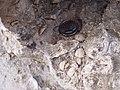 Fossil P8130018.jpg