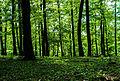 Frühlingstag in Lainzer Tiergarten.jpg