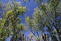 French Park Trees 006.jpg