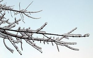 English: Frozen trees on New Year's eve, Kapot...
