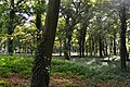 Górka Wąsoska Park 1.jpg