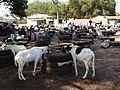 GambiaSerrekundaBrikama018 (12029428853).jpg