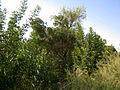 Garden Way - Wall - trees - streamlet - 17 Shahrivar st - Nishapur 32.JPG