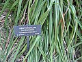 Gardenology.org-IMG 0832 hunt07mar.jpg