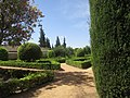Gardens and Cypresses trees, Avenue of Kings, Alcázar, Cordoba, 21 July 2016 (3).JPG