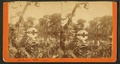 General view of Silver Springs, Fla, from Robert N. Dennis collection of stereoscopic views 3.png