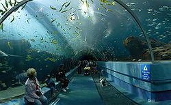 Georgia Aquarium, nos EUA - T�nel de viagem ao oceano.