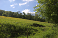 Gersfeld Obernhausen SCI 555578052 Pasture W.png