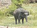 Giant Elephant.jpg