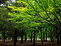 Glowing Trees - Yoyogi Park (40144315860).jpg