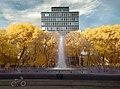Golden Trees, Blueberry Fountains.jpg