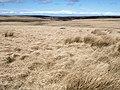 Grass moorland, Pinford - geograph.org.uk - 760684.jpg