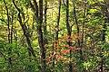 Gravel Family Nature Preserve (7) (30340949486).jpg
