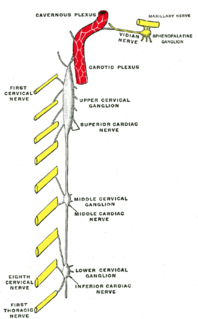 Inferior cervical ganglion