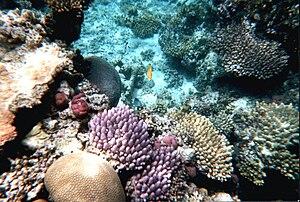 Deutsch: Tauchen am Great Barrier Reef