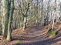 Greensand Way by Thursley - geograph.org.uk - 691914.jpg