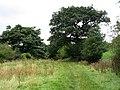 Gritstone Trail - geograph.org.uk - 55487.jpg