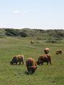 Grote grazers (xndr).jpg