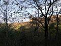 Gwalior fort through trees.jpg