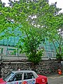 HK Sheung Wan Hollywood Road Stonewall Banyan trees n Taxi Mar-2013.JPG
