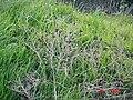 HaBonim-Dor beach reserve DSC00606.JPG