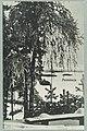 Harjutie, Laukanlahti, Mäntyniemi, Nuotsaari, Laukansaari, 1910s–1920s PK0135.jpg