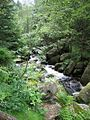 Harz strecke wernigerode brocken bergbach holtemme ds wv 06 2007.jpg