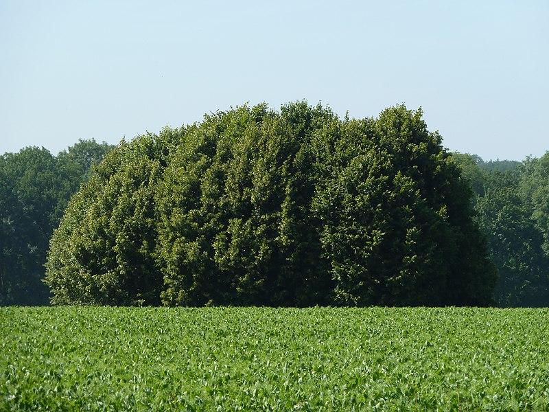 Tumulus de Havelange, Havelange/Clavier, Belgique