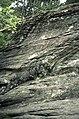 Helleristninger av reinsdyr på Steinmohaugen ved Hell i Stjørdal (1987) (12118758626).jpg