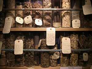Cunning folk in Britain - A variety of herbs and other floral ingredients that British cunning folk used in preparing potions and other healing concoctions.