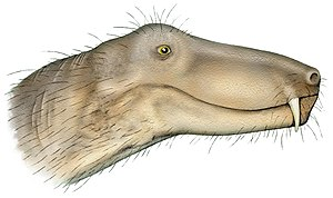 Cistecephalus Assemblage Zone - Herpetoskylax