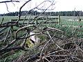 Hidden well - geograph.org.uk - 362731.jpg
