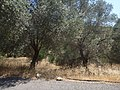Holidays Greece - panoramio (280).jpg